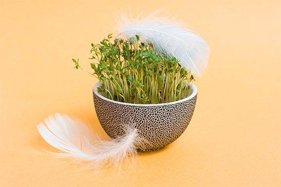 green-grower-bowly.jpg